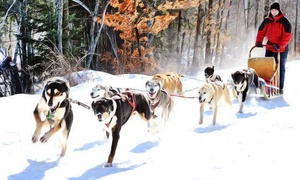 Ultimate Dogsledding Experience: One-Hour Dogsledding Trips for Up to Four or Six at Ultimate Dog Sledding Experience (Up to 41% Off)