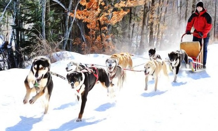 Two-Hour Dog Sled Ride for Two or Four at Ultimate Dog Sledding Experience (40% Off)