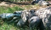 Kliebert's Turtle & Alligator Farm - Hammond: $12 for a One-Hour Tour for Two Adults at Kliebert's Turtle and Alligator Farm in Hammond ($24 Value)