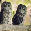 Up to 62% Off Wildlife Tour and Owl Adoption