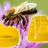 Hanging Wasp & Bee Trap