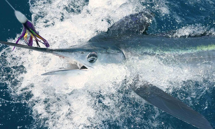 Fish On Board Charters - Fort Lauderdale: Four-Hour Deep-Sea-Fishing Trip for One or Two from Fish On Board Charters (58% Off)