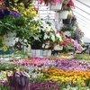 Half Off Plants and Garden Supplies in Leicester