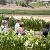 Up to 57% Off Winery and Vineyard Tour with Wine Tastings