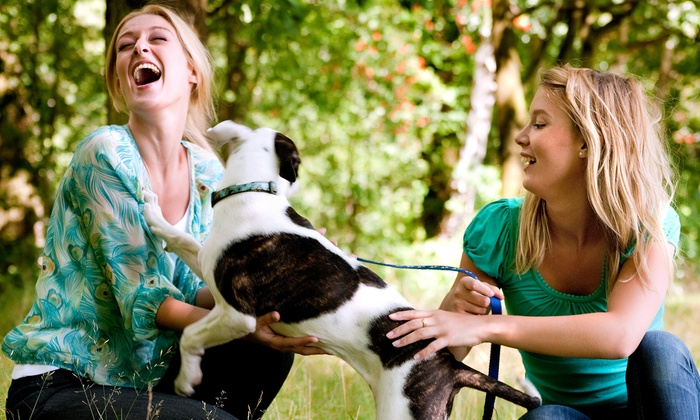 Doo Care - Hinsdale: Dog Waste Removal Services for One or Two Dogs from Doo Care (50% Off)