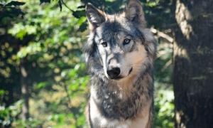 Analisi degli atti di bracconaggio sul lupo - Life Learning: Videocorso sull' analisi degli atti di bracconaggio sul lupo con Life Learning (sconto 83%)