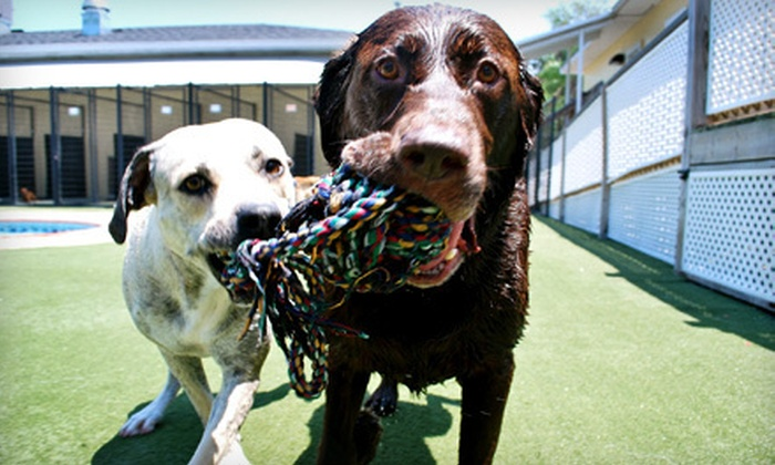 Pet Paradise - Multiple Locations: Two Days of Doggy Daycare or Three Days of Dog or Cat Boarding at Pet Paradise (Up to 53% Off)