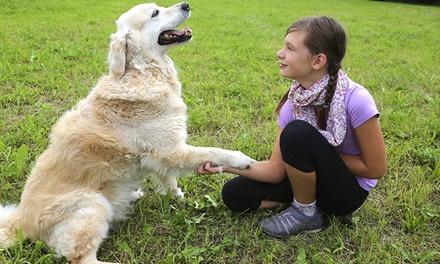 Dog Training Turramurra