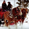 Up to 55% Off Sleigh Ride for Two or Four