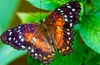 Up to 34% Off Admission at Butterfly Wonderland