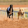 Dog Racing with Meal and Drink