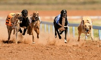 Greyhound Racing with Racecard, Burger and Drink for up to Eight (Up to 68% Off)