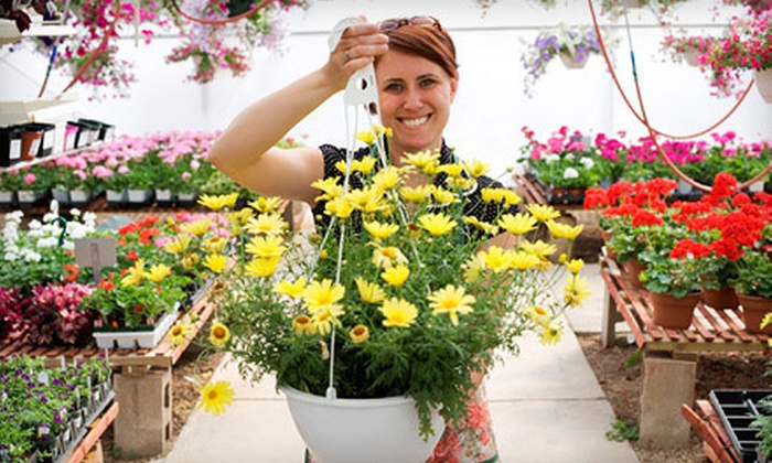 Montgomery Gibbs Nursery - Concord: $15 for $30 Worth of Fall Flowers, Plants, Trees, and Shrubs at Montgomery Gibbs Nursery