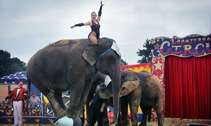 Loomis Bros. Circus - Blount County-Oneonta AgriBusiness Center: Loomis Bros. Circus for One Adult, One Kid, or Two Adults and Four Kids on February 3 (Up to 65% Off)