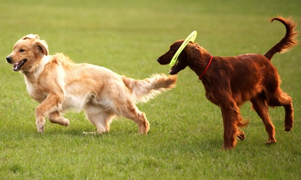 5 or 10 Days of Doggie Daycare or 5 Days of Boarding at All Tails' R' Waggin' (Up to 52% Off)