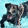 Up to 53% Off Pet-Care Services in Kenner