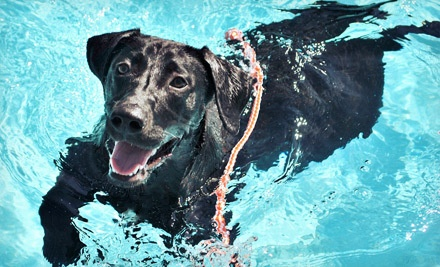 2 Days of Dog Daycare (a $48 value) - Pet Paradise Louisiana in Kenner