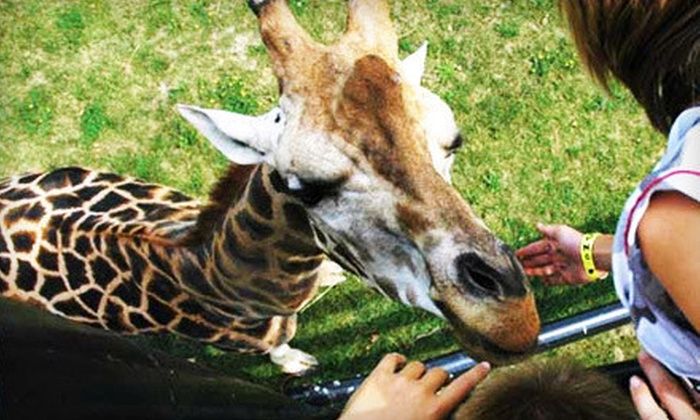 Safari Niagara - Stevensville: $11 CAN for Animal-Park Visit at Safari Niagara in Stevensville (Up to $22.54 USD Value)