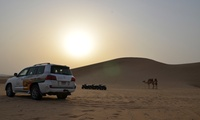 Desert Safari with Falcon Show for One or Two People from Capital Gate