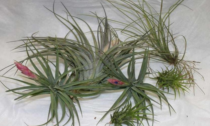 Tilly Shack - Allwood: $14 for $25 Worth of Plants — Tilly Shack