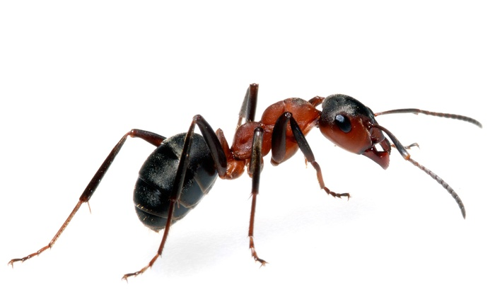 Black Mountain Pest Control - Las Vegas: $32 for Interior and Exterior Pest Control Service from Black Mountain Pest Control ($65 Value)
