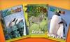 """Zoobooks,"" ""Zootles,"" or ""Zoobies"" Magazine Subscription: One- or Two-Year Animal-Magazine Subscription from Wildlife Education Ltd. (Up to 68% Off). Free Shipping."