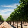 $11 for a Wine Tasting for Two at Joyce Vineyards