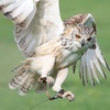 Falconry or Owl Experience
