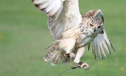 OneHour Owl or Falconry Experience for Up to Four at Hawk on the Wild Side