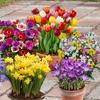 300 Spring Flowering Bulbs