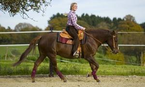 jm ranch: 5 lezioni o passeggiate di equitazione (sconto 74%)