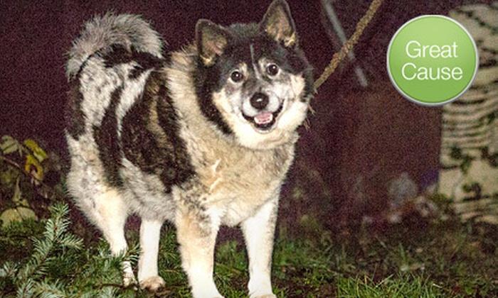 Fences For Fido - Portland: $12 Donation to Help Build a Dog Fence