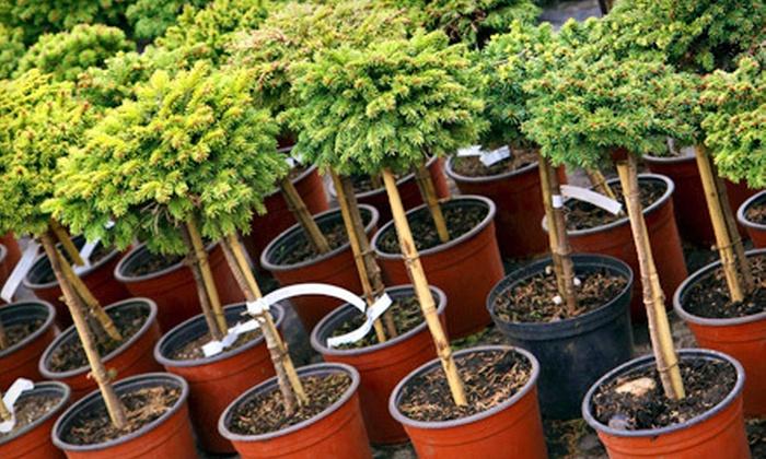 Harvard Nursery Inc - Harvard: $25 for $50 Worth of Plants and Trees at Harvard Nursery Inc