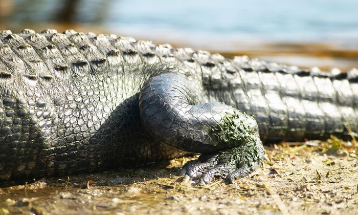 The Gators Nest - Sanford: 60- or 90-Minute Airboat Tour for One or Two at The Gator Nest (Up to 53%)