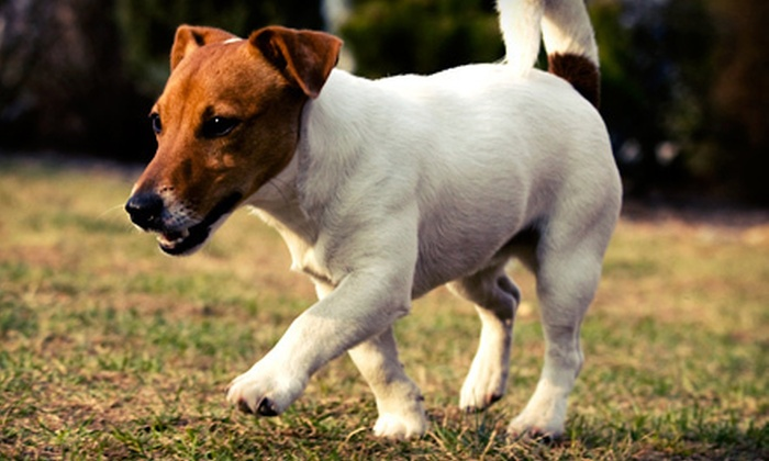 Poo Crew - Regina: Dog Waste Removal Services from Poo Crew (Up to 56% Off). Two Options Available.