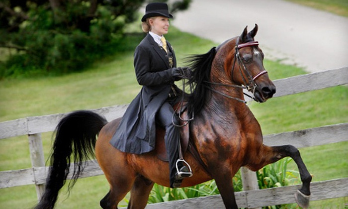 Price Performance Horses, LLC - New Berlin: $39 for Two Private 60-Minute Horseback-Riding Lessons at Price Performance Horses, LLC ($80 Value)