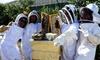 San Francisco Honey & Pollen Company - Bayview: Beekeeping Class with Honey Tasting at San Francisco Honey & Pollen Company (Up to 68% Off)