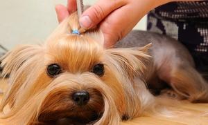 Curso de iniciación a la peluquería canina para una o dos personas desde 16,90 €