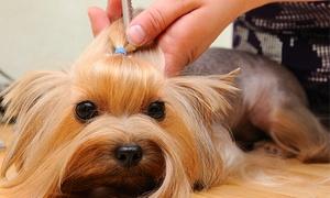 Mascotas Modernas: Curso de iniciación a la peluquería canina para una o dos personas desde 16,90 €