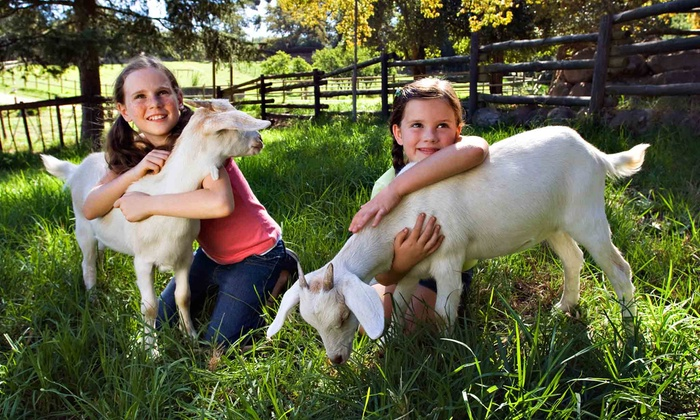 Green Meadows Petting Farm - East Troy: Animal Petting Farm Visit for Two or Four at Green Meadows Petting Farm in Waterford (Up to 54% Off)
