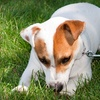 Up to 62% Off at Vetcetera Animal Hospital