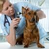 55% Off Pet Care