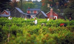 Domaine du Ridge: Expérience de dégustation de vins et produits locaux pour 2 ou 4 au Domaine du Ridge (jusqu'à 66 % de rabais)