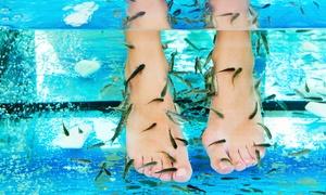 REVE ET BEAUTE: Séance de fishpedicure de 20 ou 30 minutes pour 1 ou 2 personnes dès 15 € chez Rêve et Beauté