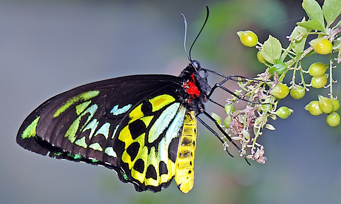 The Butterfly Place - Westford: Admission for Two at The Butterfly Place (42% Off)