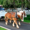 Half Off Horse-Drawn Hayride for Two