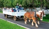 Wonder Valley Ranch Resort - Sierra: $30 for a Horse-Drawn Hayride for Two at Wonder Valley Ranch Resort ($60 Value)
