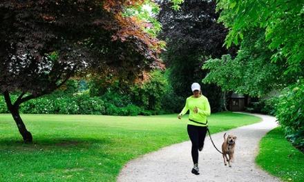 Hondenlijn voor tijdens het joggen