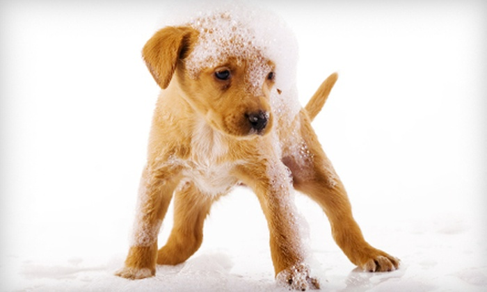 Pet Supplies Plus - The Lakes: $25 for a Dog-Grooming Package with Haircut, Bath, Nail Trim, and Ear Cleaning at Pet Supplies Plus (Up to $68 Value)