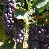 Up to 46% Off at Zarpara Vineyard